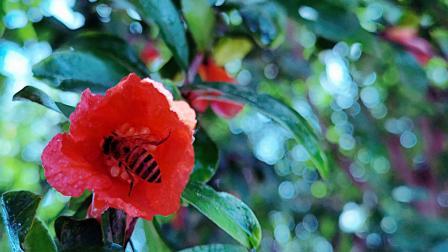 石榴花开儿朵朵红