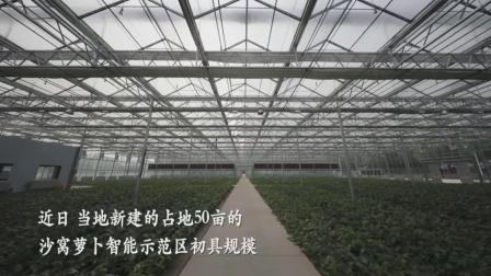 """特色农业让温室大棚种出致富""""金萝卜""""#智能温室  #萝卜大棚  #玻璃大棚"""