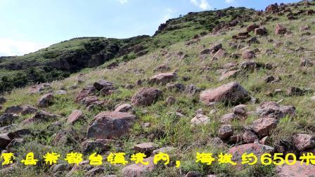 游紫都台平顶山