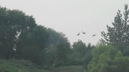 9月9日小帅们飞到后湖