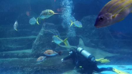 在水中游来游去的一直游泳的鱼