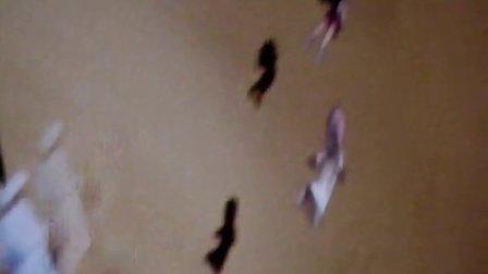 2010年上海世博会阿联酋馆影片