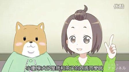 柴犬子 05