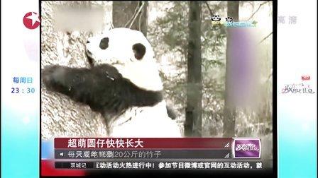 20130923_东方卫视_双城记.大熊猫圆仔HDTV.1080P.H264.AC3