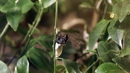 热带雨林里的昆虫