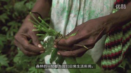 【森林解决方案】巴布亚新几内亚的生态林业5