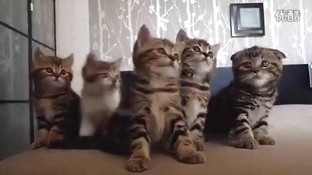 CR7让猫咪看花了眼