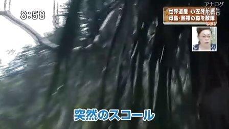 『はなまるマーケット』'11.06.28 祝!世界遺産登録 自然を満喫 小笠原の旅