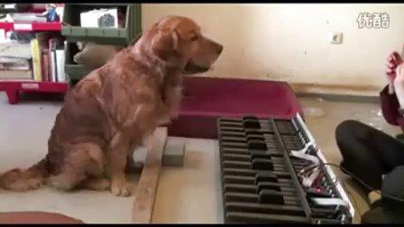 上音乐课的天才小狗