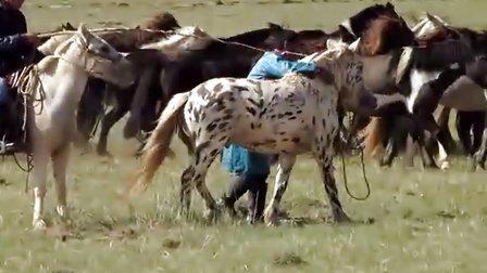 乌拉特中旗快马协会  套马