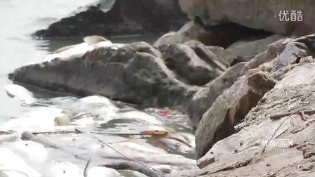 【拍客】武汉南湖再现大面积死鱼