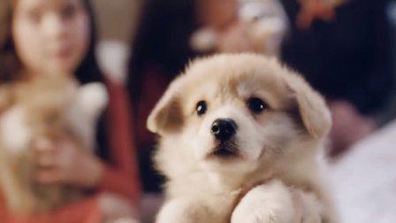 【猴姆独家】英国最火McVitie's原味消化饼干狗狗版广告爆红网络!