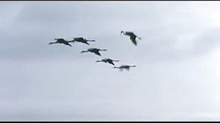 Le Retour Des Grues(迁徙的鸟插曲)
