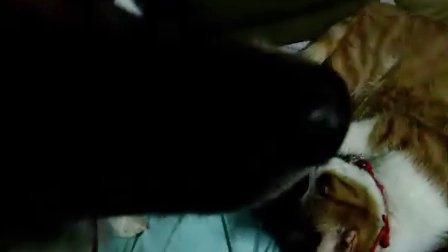 超级爱撒娇的小猫2
