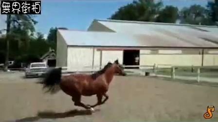 高智商马逃出马场