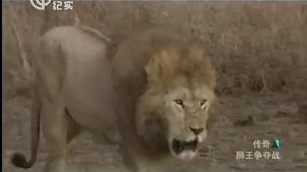 狮王争夺战