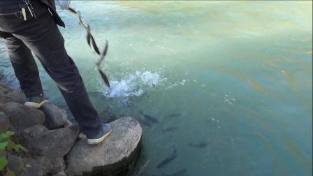 树河石门坎电站放鱼视频