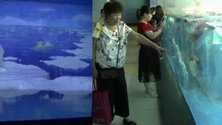 豆豆五岁游极地水族馆1 豆爷摄编