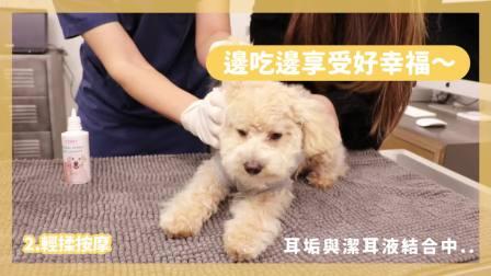 【T-PET 宠物草本植净呵护洁耳液】原来🐶🐱毛孩的耳朵没有我们想像的干净