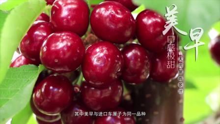 【影腾文化作品】福山大樱桃宣传片