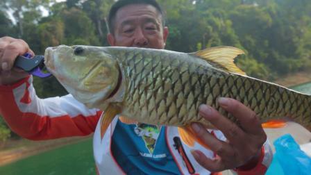什么样的鱼被称为铁嘴战士让大毛老师惊喜不已