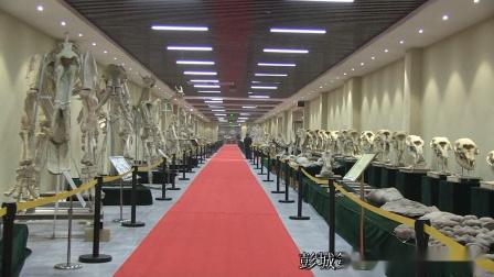 彭城第一拍客拍摄制作:《世界奇观叹为观止》中国最大齐河大地自然博物馆群专题视频