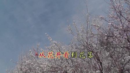 沈北新区喜洋洋广场舞《沈北新区:桃花盛开》配乐:这一生说过我爱你    带字幕1080p