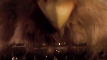 【段志超世界音乐】爆赞!美国全明星摇滚乐队Chickenfoot强势新单Bigfoot