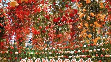 《红玫瑰与白玫瑰》冷漠 高清MV
