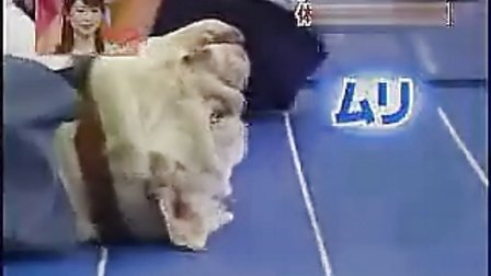 www.baiji.com.cn【爆笑】猴子仰P起做
