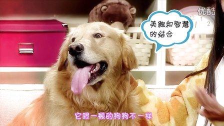 爱吃的狗狗06