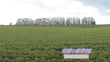 奇迹动物园 主演:户田惠梨香 津川雅彦
