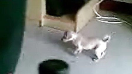 可爱的龟龟,好可爱的小狗,寝室之宝!