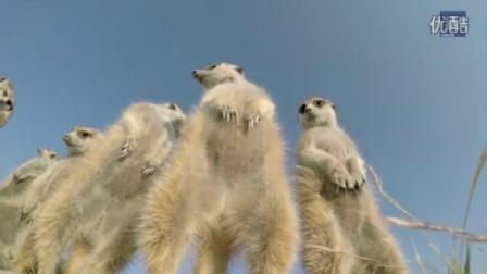 【冯导】地上摄像机记录野生动物精彩一幕—在线播放—《【冯导】地上摄像机记录野生动物精彩一幕》—资讯—优酷网,视频高清在线观看