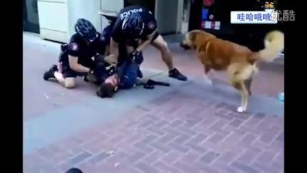 【哇哈哦哦】主人被抓,加拿大忠犬对两警察呲牙狂吠