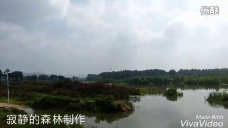 【音乐视频】雨中的鸟依然在飞