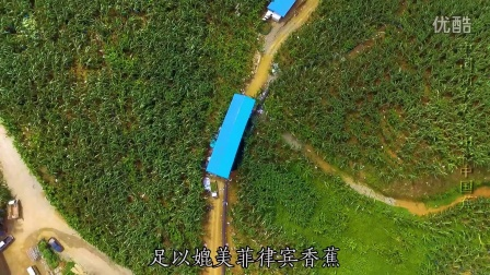 中国新农人·出彩中国蕉-常哥家的云河香蕉|《握在手中的丰收》