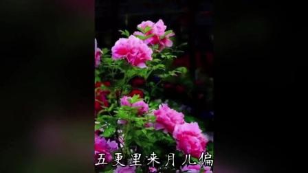 贵州山歌 - 夫妻对骂啄嘴歌