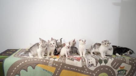 给20只小猫咪合影,少女使出了吃猫的力气,结果......
