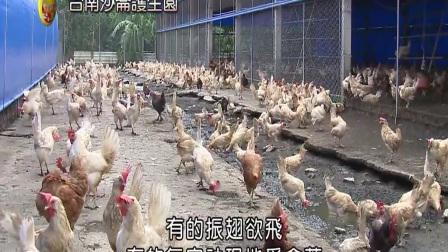 台湾【护生园】海涛法师救助流浪动物