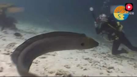 潜水客泰国喂食海鳗被咬掉手指 只好移植脚趾替代