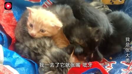 6只可爱的小猫崽,婆婆全部要自己养