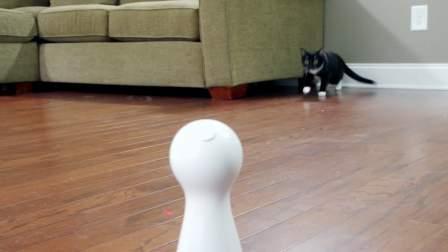 【2017新品】激光宝瓶 - PetSafe* Bolt自动激光逗猫器