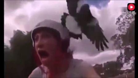 老鹰攻击人类时被拍下的可怕画面