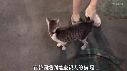 男子邂逅超亲人的流浪猫