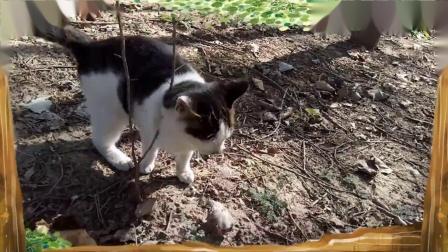 可爱的小猫(之三)