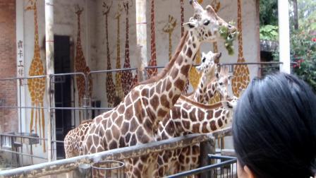 游广州动物园