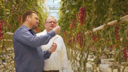 科迪马德国16公顷西红柿水管理和照明解决方案