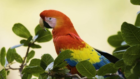 Kering-The Explorers: Macaws in Honduras