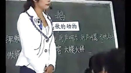 小学四年级语文优质课视频上册《白鹅》蔺老师